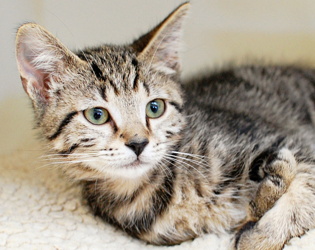 Adopt A Kitten at Lucky Chance Rescue