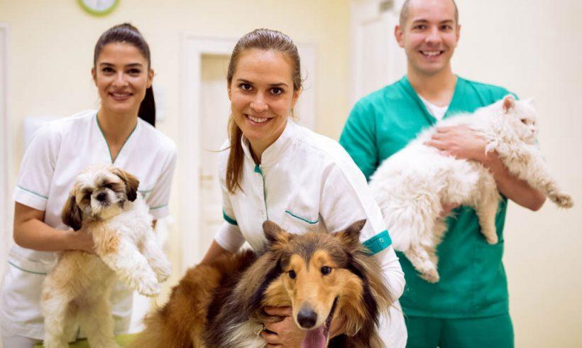 Veterinary Care 2021