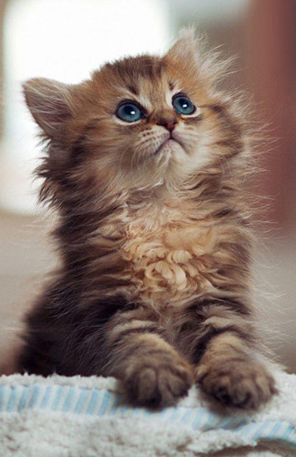 adopt a kitten lucky chance rescue