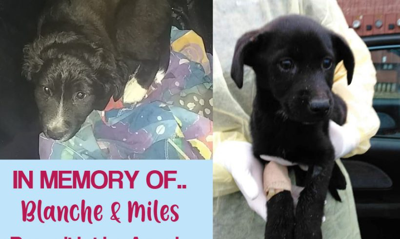 Please Help Our Parvo Puppies.