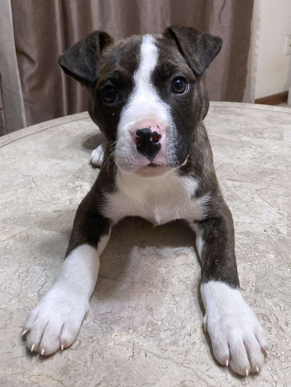 Adopt Sasha Lucky Chance Rescue